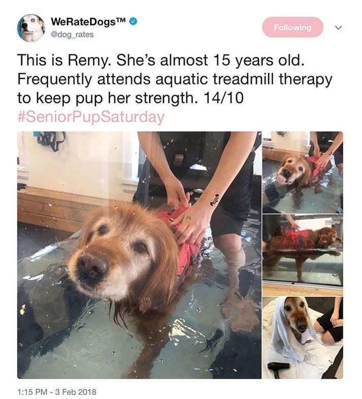 Dog - WeRateDogsTM @dog rates Following This is Remy. She's almost 15 years old. Frequently attends aquatic treadmill therapy to keep pup her strength. 14/10 #SeniorPupSaturday 1:15 PM 3 Feb 2018 pitoy