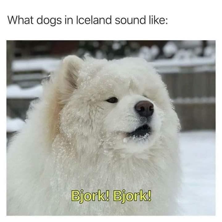 Dog - What dogs in Iceland sound like: Bjork! Bjork!