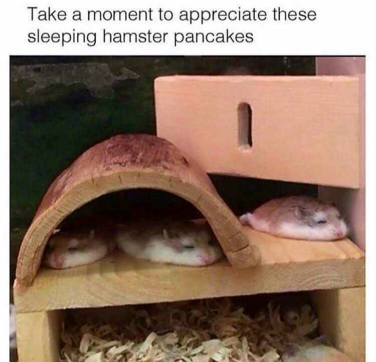 Adaptation - Take a moment to appreciate these sleeping hamster pancakes