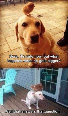 Dog - Sure, it's cute now, but what happens when he gets bigger? Well that answers that question
