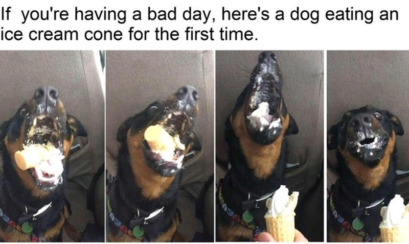Photo caption - If you're having a bad day, here's a dog eating an ice cream cone for the first time.