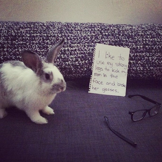 Domestic rabbit - ke to Use my strng leas to kidk mon in the face and brde her gasses.