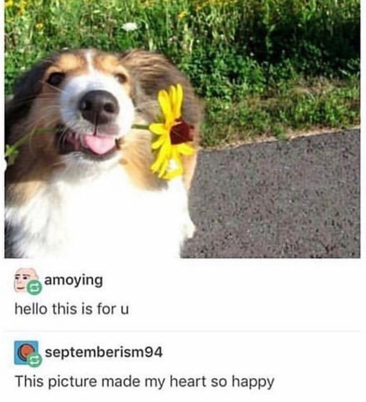 Dog - amoying hello this is for u septemberism94 This picture made my heart so happy