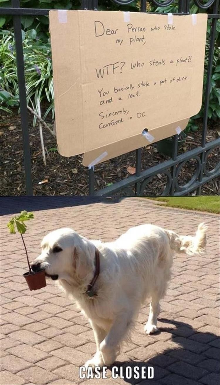 Dog - Dear Persan we sok my plant WTF? who stealks plact? You besicaly stole a pot of dlirt a nd a lea f Sincerely DC Cenfisek in CASE CLOSED