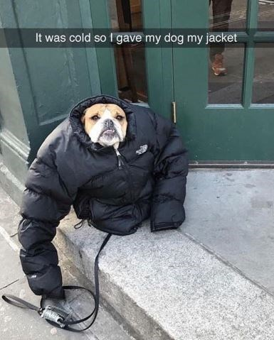 Snout - It was cold so 1 gave my dog my jacket