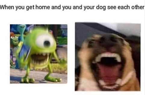 Facial expression - When you get home and you and your dog see each other