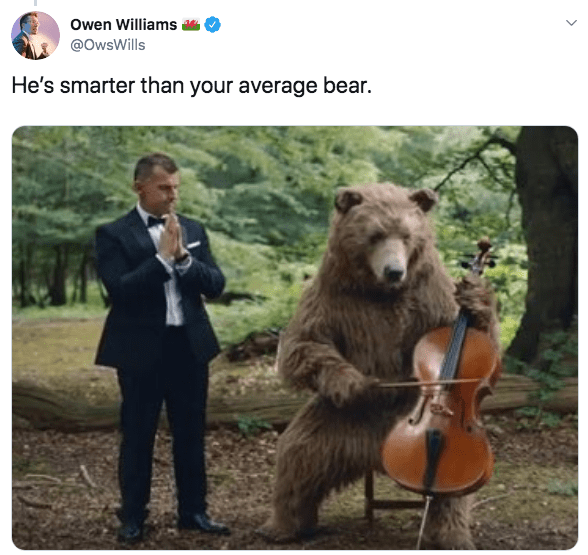 Adaptation - owen Williams @OwsWills He's smarter than your average bear.