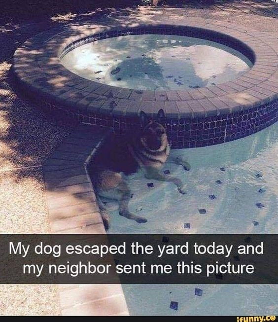 Water - My dog escaped the yard today and my neighbor sent me this picture if ynny.co