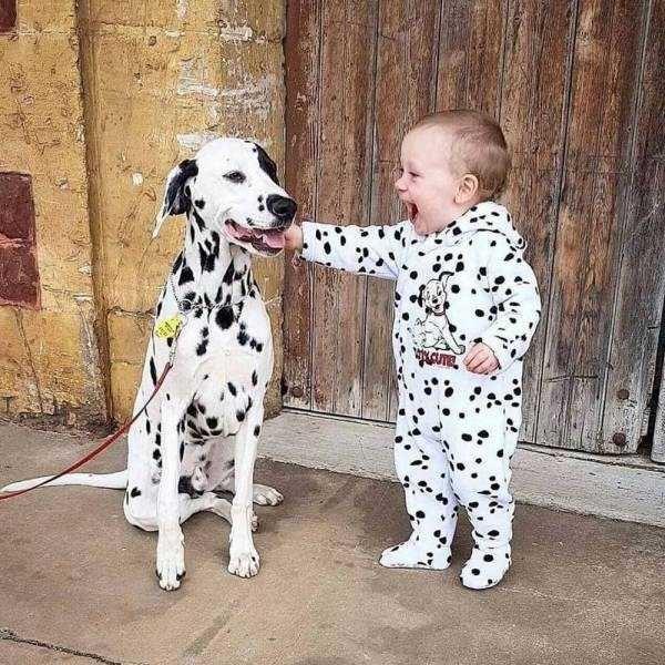 Dalmatian - CUTE