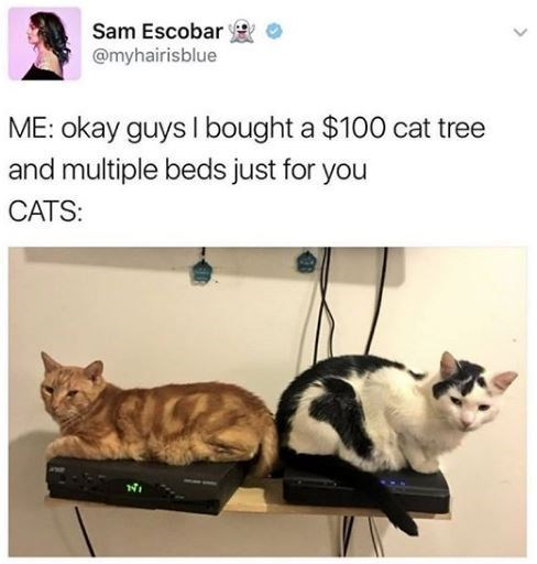 Cat - Sam Escobar @myhairisblue ME: okay guys I bought a $100 cat tree and multiple beds just for you CATS: