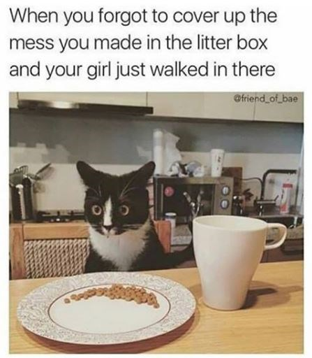 Cat - When you forgot to cover up the mess you made in the litter box and your girl just walked in there @friend of_bae