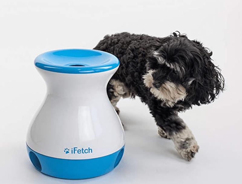 Dog - iFetch
