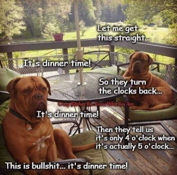 Dog - Let me get this straight... Its dinner time! So they turn the clocks back.. Cray Bitcher Your Khaw Whe You Are It's dinner time! Then they tell us it's only 4 o'clock when it's actually 5 o'clock... This is bullshit...it's dinner time!
