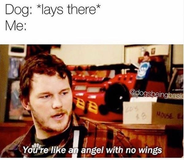 Text - Dog: *lays there* Me: @dogsbeingbasidc MOUSE You're like an angel with no wings