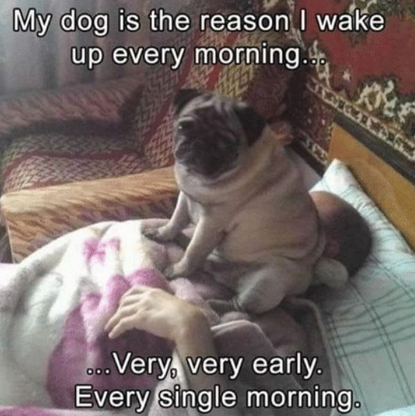 Dog - My dog is the reason wake up every morning. Very very early. Every single morning.