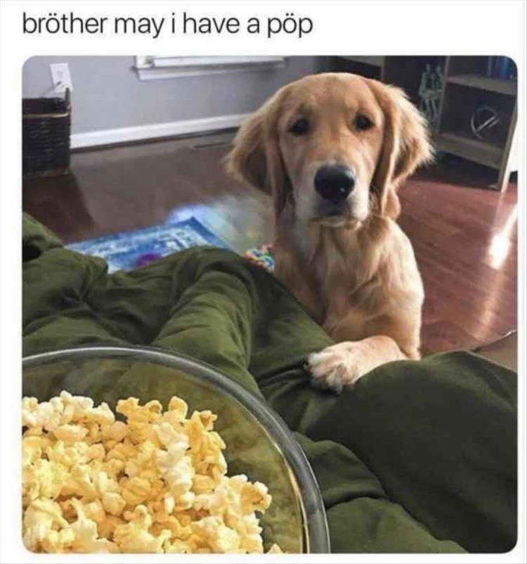 Dog - bröther may i have a pöp