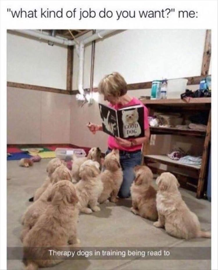 "Dog - ""what kind of job do you want?"" me: COOD DOG Therapy dogs in training being read to"