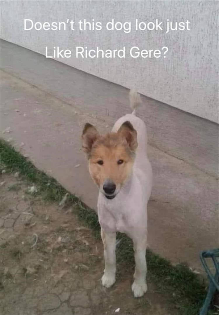 Dog - Doesn't this dog look just Like Richard Gere?