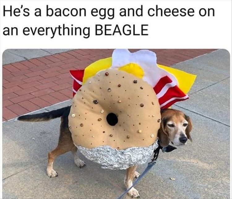 Dog - He's a bacon egg and cheese on an everything BEAGLE