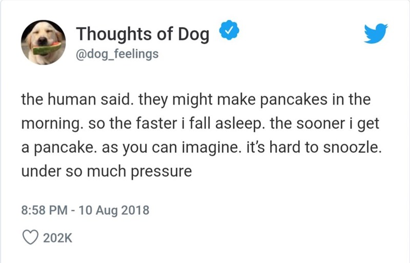 Text - Thoughts of Dog @dog_feelings the human said. they might make pancakes in the morning. so the faster i fall asleep. the sooner i get a pancake. as you can imagine. it's hard to snoozle. under so much pressure 8:58 PM -10 Aug 2018 202K