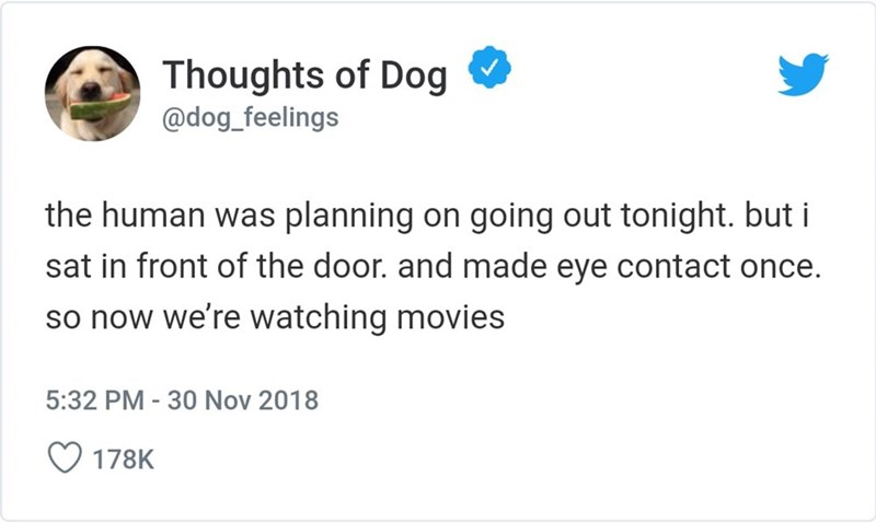 Text - Thoughts of Dog @dog_feelings the human was planning on going out tonight. but i sat in front of the door. and made eye contact once. so now we're watching movies 5:32 PM -30 Nov 2018 178K