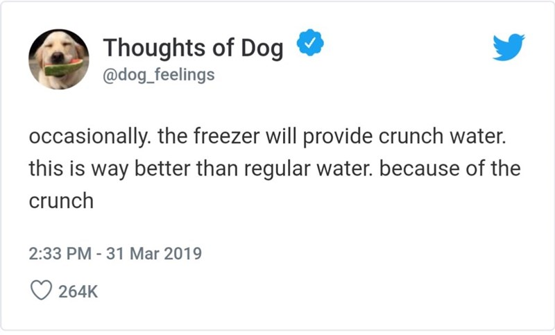 Text - Thoughts of Dog @dog_feelings occasionally. the freezer will provide crunch water. this is way better than regular water. because of the crunch 2:33 PM - 31 Mar 2019 264K