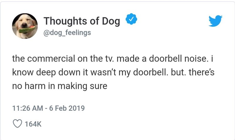 Text - Thoughts of Dog @dog_feelings the commercial on the tv. made a doorbell noise. i know deep down it wasn't my doorbell. but. there's no harm in making sure 11:26 AM - 6 Feb 2019 164K
