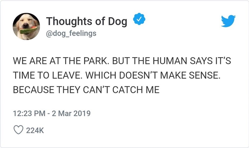 Text - Thoughts of Dog @dog_feelings WE ARE AT THE PARK. BUT THE HUMAN SAYS IT'S TIME TO LEAVE. WHICH DOESN'T MAKE SENSE BECAUSE THEY CAN'T CATCH ME 12:23 PM - 2Mar 2019 224K