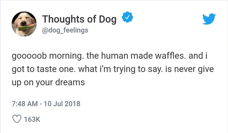 Text - Thoughts of Dog @dog_feelings gooooob morning. the human made waffles. and i got to taste one. what i'm trying to say. is never give up on your dreams 7:48 AM- 10 Jul 2018 163K