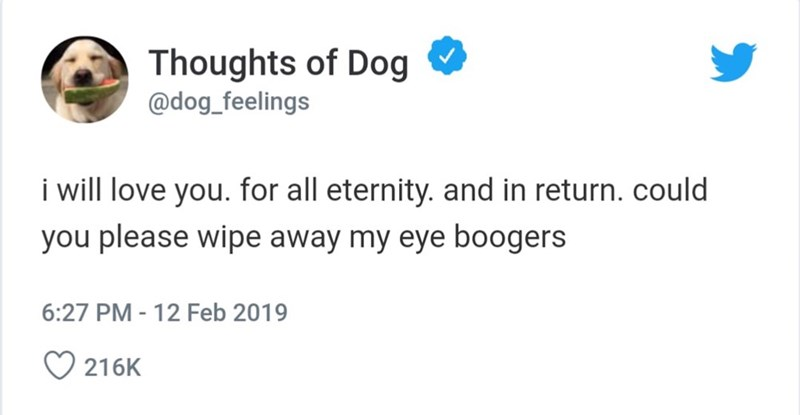 Text - Thoughts of Dog @dog_feelings i will love you. for all eternity. and in return. could you please wipe away my eye boogers 6:27 PM-12 Feb 2019 216K