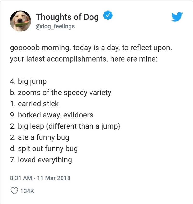 Text - Thoughts of Dog @dog_feelings gooooob morning. today is a day. to reflect upon. your latest accomplishments. here are mine: 4. big jump b. zooms of the speedy variety 1. carried stick 9. borked away. evildoers 2. big leap (different than a jump) 2. ate a funny bug d. spit out funny bug 7. loved everything 8:31 AM -11 Mar 2018 134K
