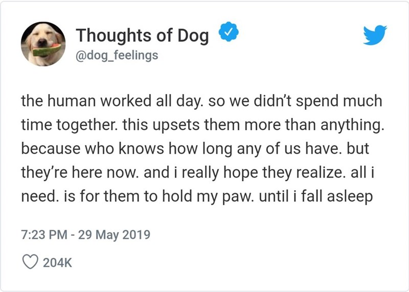 Text - Thoughts of Dog @dog_feelings the human worked all day. so we didn't spend much time together. this upsets them more than anything. because who knows how long any of us have. but they're here now. and i really hope they realize. all i need. is for them to hold my paw. until i fall asleep 7:23 PM - 29 May 2019 204K