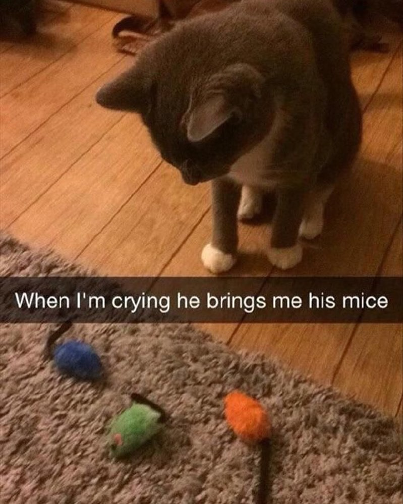 Cat - When I'm crying he brings me his mice