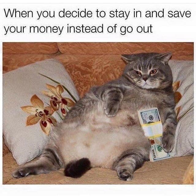 Cat - When you decide to stay in and save your money instead of go out