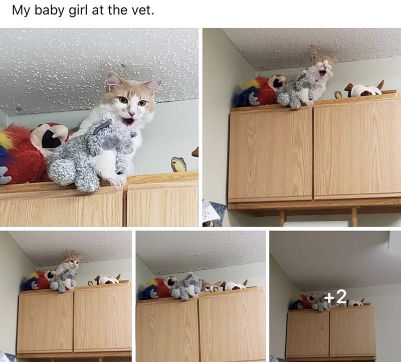 Cat - My baby girl at the vet. +2