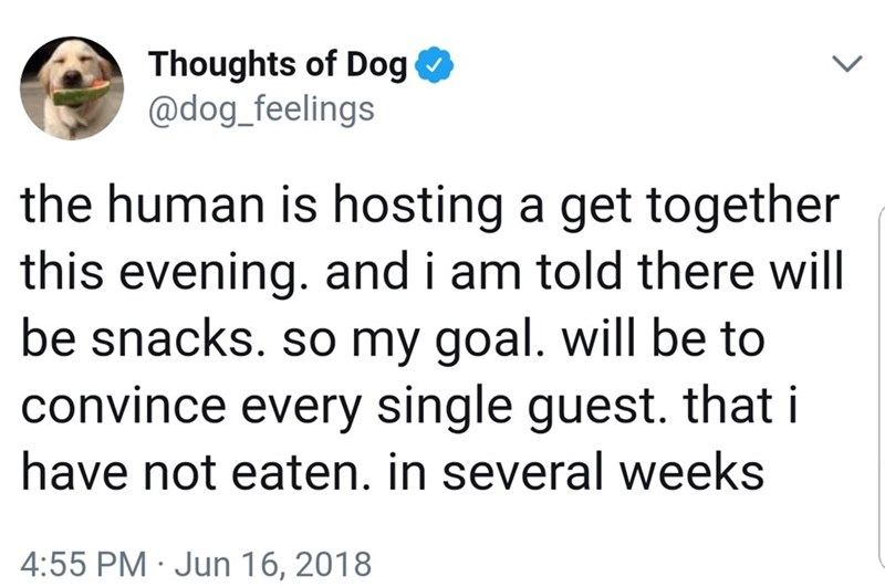 Text - Thoughts of Dog @dog_feelings the human is hosting a get together this evening. and i am told there will be snacks. so my goal. will be to convince every single guest. that i have not eaten. in several weeks 4:55 PM Jun 16, 2018