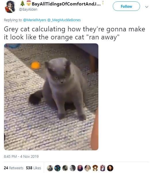 "Cat - BayAllTidingsOfComfortAndJ... @BayAlden Follow Replying to@MerielMyers@MegMuckleBones Grey cat calculating how they're gonna make it look like the orange cat ""ran away"" 8:45 PM -4 Nov 2019 24 Retweets 538 Likes"
