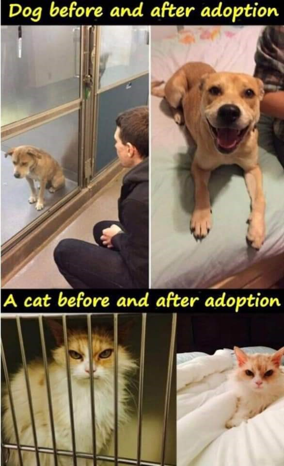 adopt dogs adopted Cats funny - 9384536576