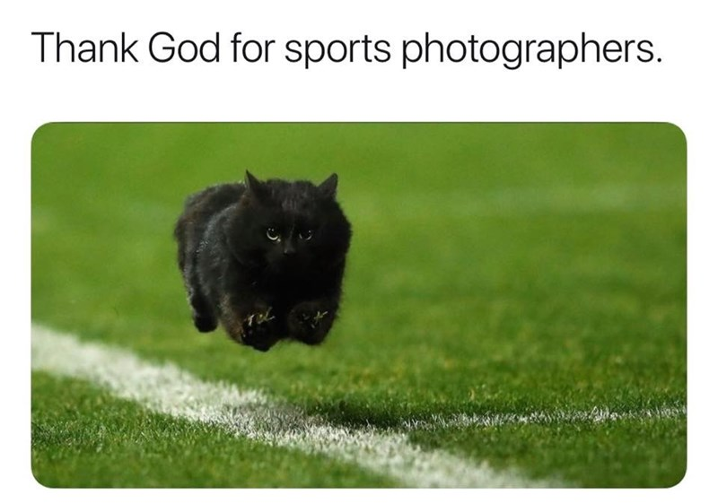 sports lol Cats funny - 9384543744