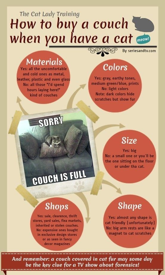 "Text - The Cat Lady Training How to buy a couch when you have a cat meow! By seriesandtv.com Materials Colors Yes: all the uncomfortable and cold ones as metal, Yes: gray, earthy tones, medium green/blue, prints No: light colors Note: dark colors hide leather, plastic and even glass No: all those ""I'd spend hours laying here!"" kind of couches scratches but show fur SORRV Size Yes: big No: a small one or you'll be the one sitting on the floor or under tha cat. COUCH IS FULL Shops Shape Yes: sale,"