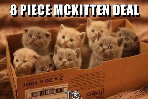 Cat - Friskies TR 2 x 20 x 100r 8 PIECE MCKITTEN DEAL