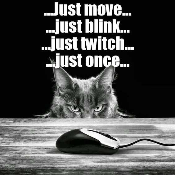 Whiskers - ..Just move... ..just blin.. .just twitch... Just once...