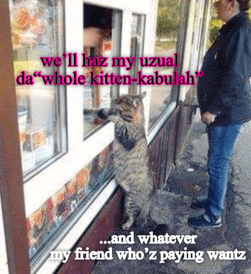 Fur - we'll haz my uzual da whole kitten-kabulah ...and whatever my friend who'z paying wantz