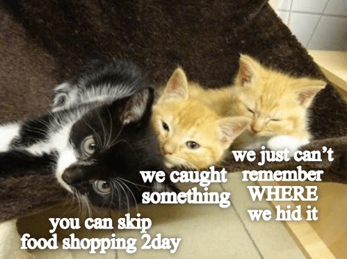 Cat - we just can't we caught remember something WHERE we hid it you can skip food shopping 2day