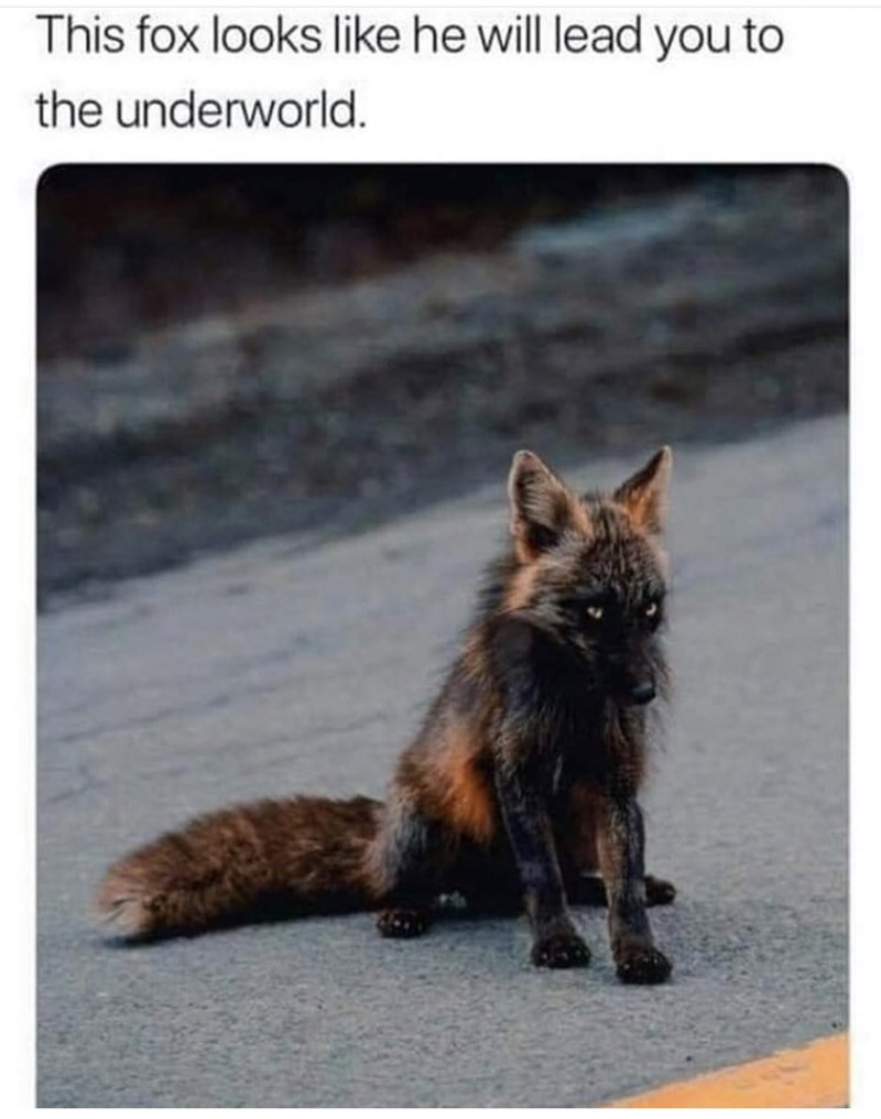 Cat - This fox looks like he will lead you to the underworld