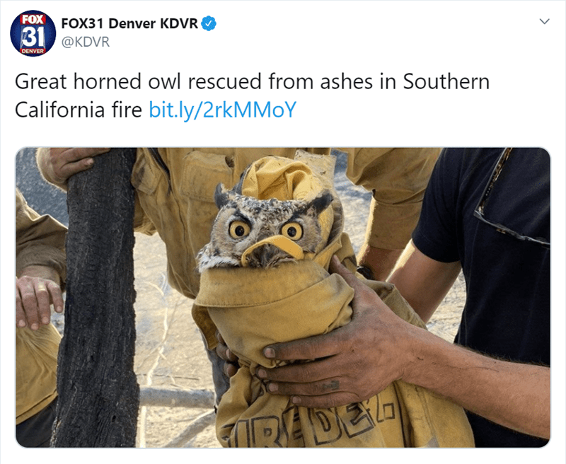 Adaptation - FOXFOX31 Denver KDVR B1 @KDVR DENVER Great horned owl rescued from ashes in Southern California fire bit.ly/2rkMMoY IPADEL