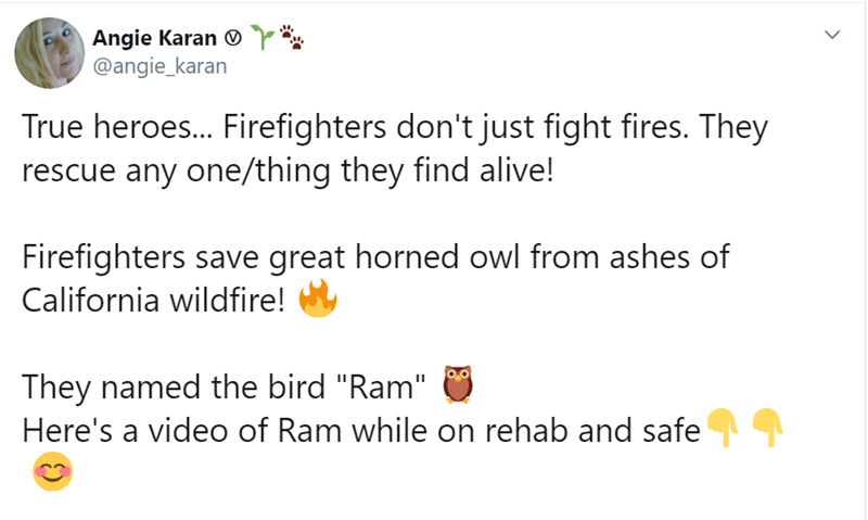 """Text - Angie Karan @angie_karan True heroes... Firefighters don't just fight fires. They rescue any one/thing they find alive! Firefighters save great horned owl from ashes of California wildfire! They named the bird """"Ram"""" Here's a video of Ram while on rehab and safe"""
