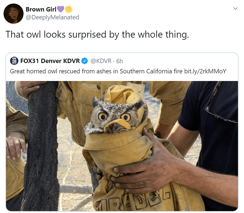 Owl - Brown Girl @DeeplyMelanated That owl looks surprised by the whole thing. FOX 31 FOX31 Denver KDVR @KDVR 6h Great horned owl rescued from ashes in Southern California fire bit.ly/2rkMMoY PADEL