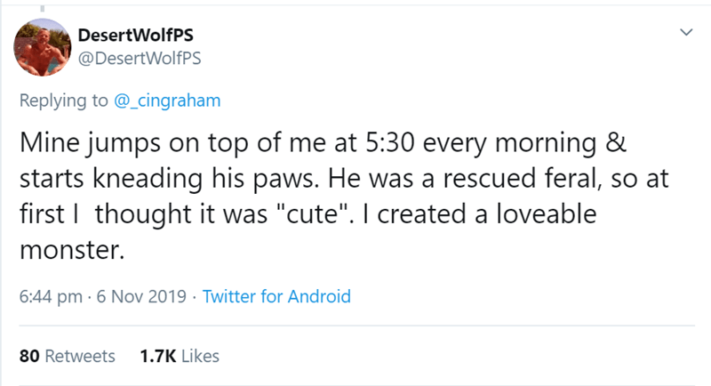 """Text - DesertWolfPS @DesertWolfPS Replying to @_cingraham Mine jumps on top of me at 5:30 every morning & starts kneading his paws. He was a rescued feral, so at first I thought it was """"cute"""". I created a loveable monster. 6:44 pm 6 Nov 2019 Twitter for Android 1.7K Likes 80 Retweets"""