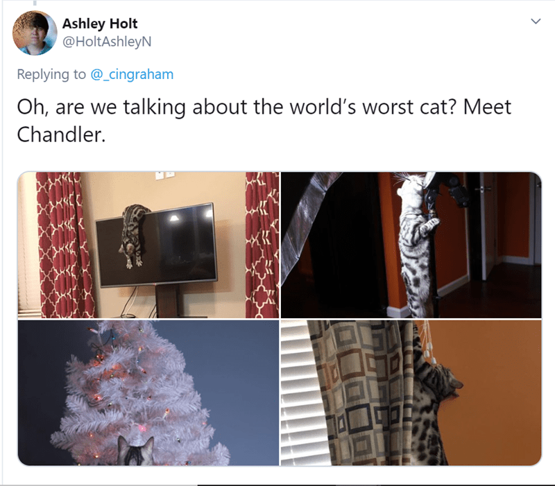 Product - Ashley Holt @HoltAshleyN Replying to @_cingraham Oh, are we talking about the world's worst cat? Meet Chandler.